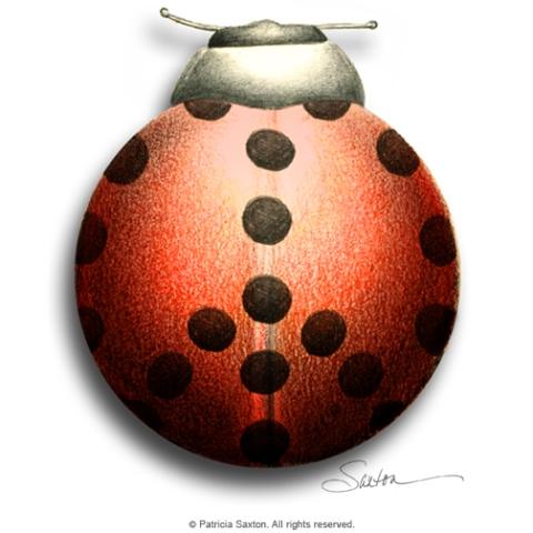 peace_ladybug