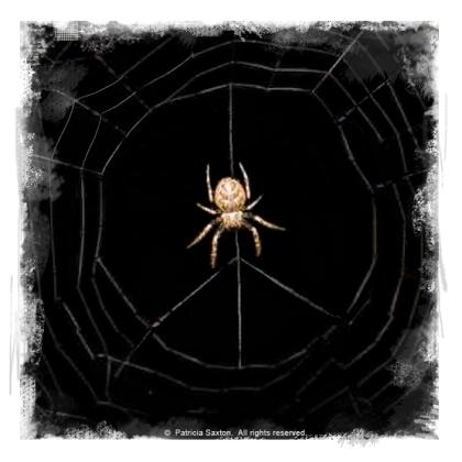 peace_spiderweb4