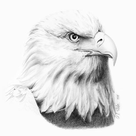 Eagle / @Patricia Saxton