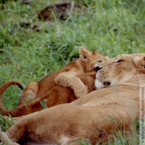 cubs.mama2