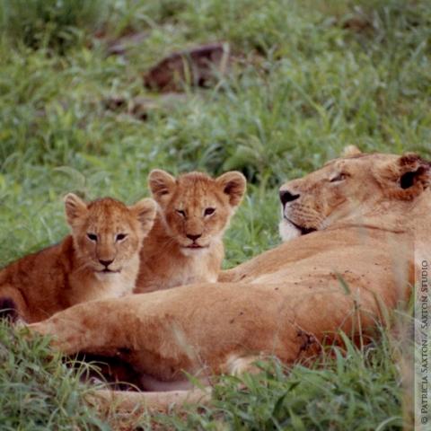 cubs.mama3