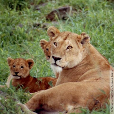 cubs.mama4