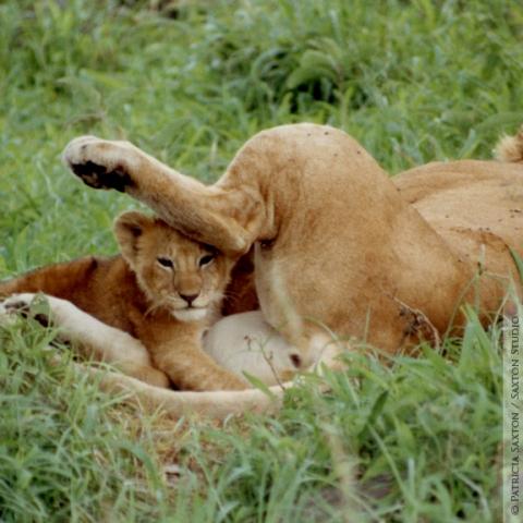 cubs.mama5