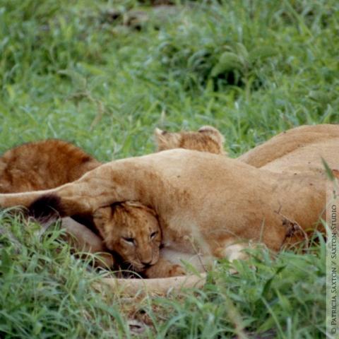 cubs.mama6