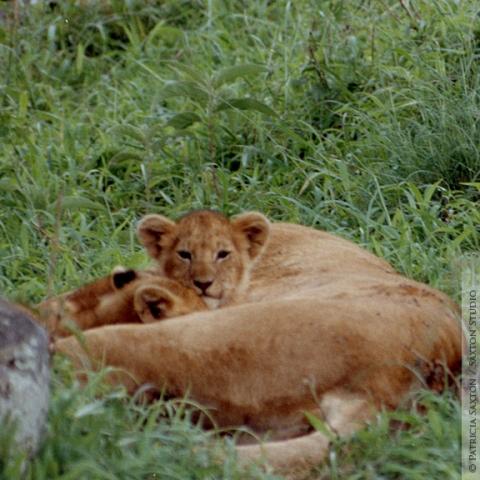 cubs.mama7