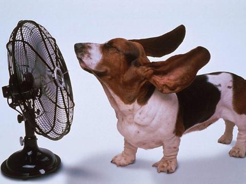 beagle.fan