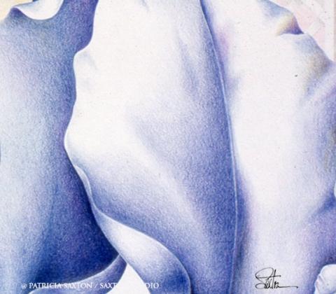 blue.iris4