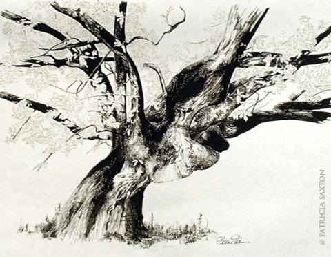 old.treeFB