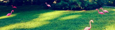 saxton_flamingos2X2