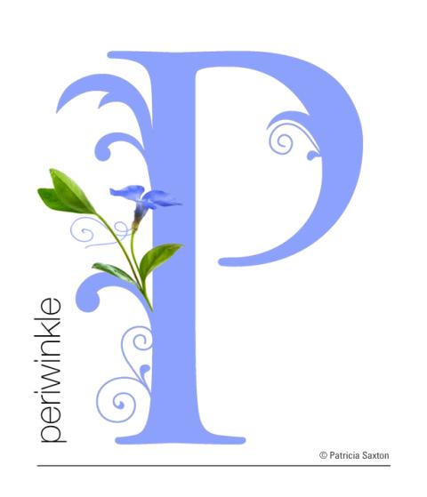 P_periwinkle