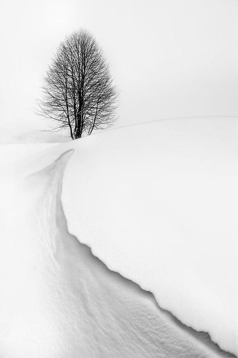 snowy.field2