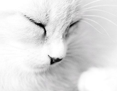 white.cat2