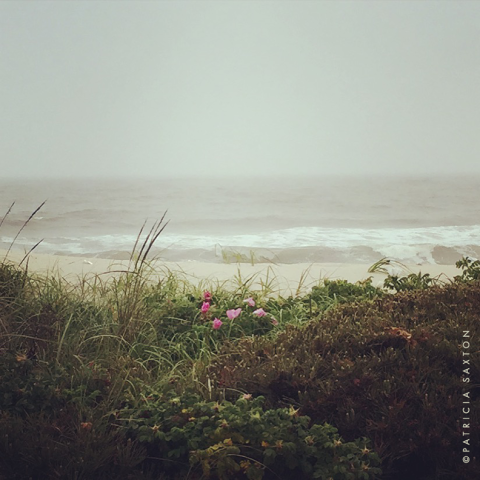 saxton_flowering.dunes.foggy