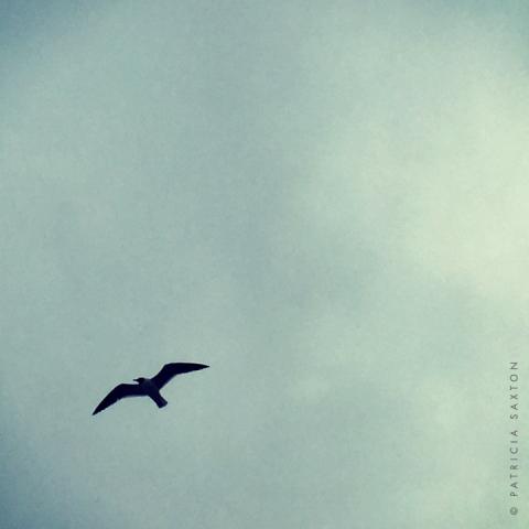 saxton_seagull.silo