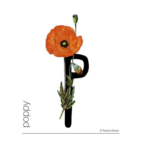 P_poppy